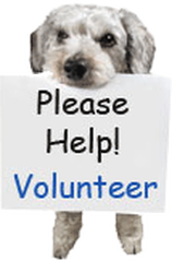 what to type in application for volunteer like interst skills