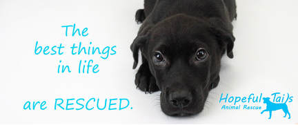 Hopeful Tails Animal Rescue - Home Page
